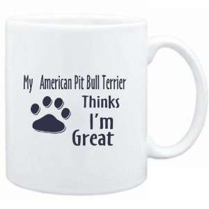 American Pit Bull Terrier THINKS I AM GREAT  Dogs