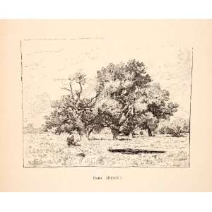 1883 Print Renie Oak Tree Glen Valley Forest France Branches